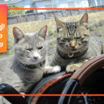 5-Ways-To-Keep-Cat-With-Your-Car