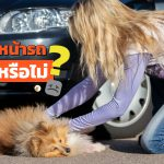If-Dog-Hit-By-Your-Car