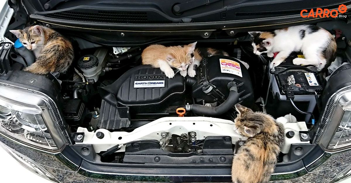 3-Good-Things-About-Open-Car-Hood